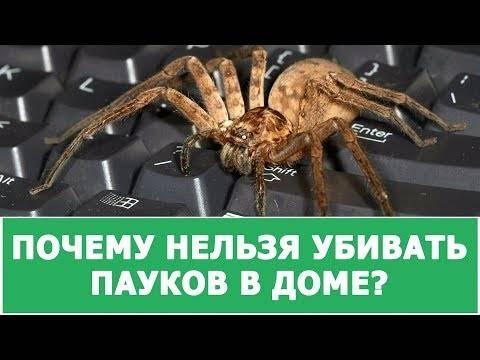 Почему нельзя убивать пауков в доме: приметы - delfi