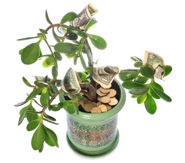 Какие растения в квартире привлекают семейное счастье и благосостояние