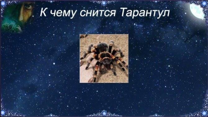 Сонник паук женщине. к чему снится паук женщине видеть во сне - сонник дома солнца