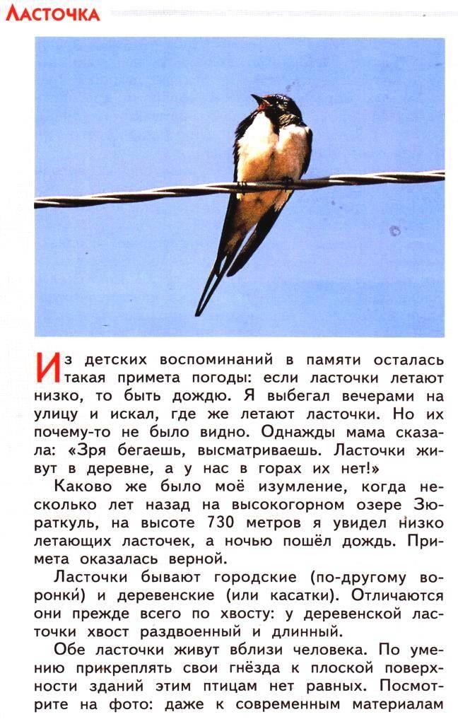 Ласточка птица. образ жизни и среда обитания ласточки