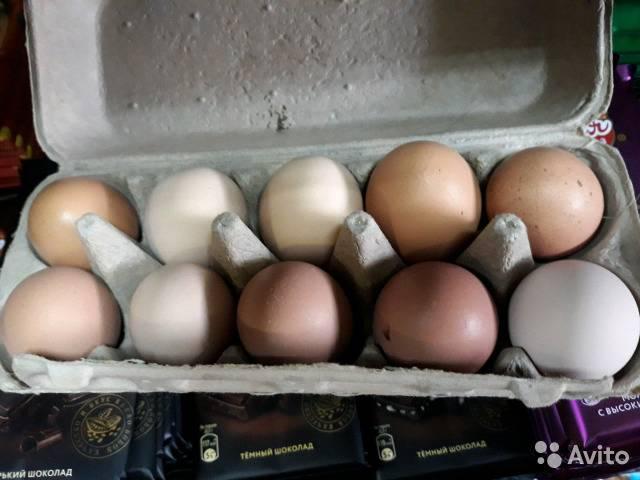 К чему снится  яйцо во сне — по 90 сонникам! если видишь во сне яйцо что значит?