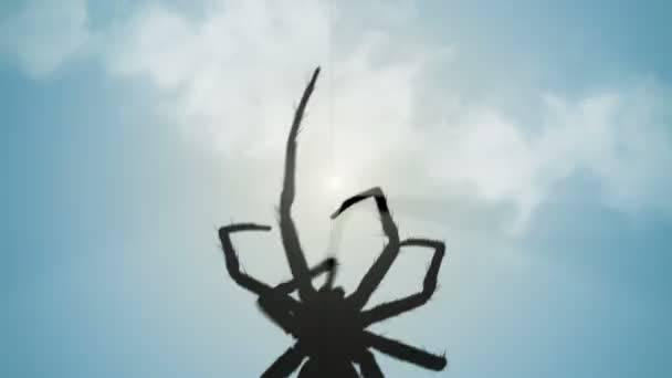 Что говорят приметы если паук ползет вверх или вниз, по человеку, спускается по паутине и другие варианты