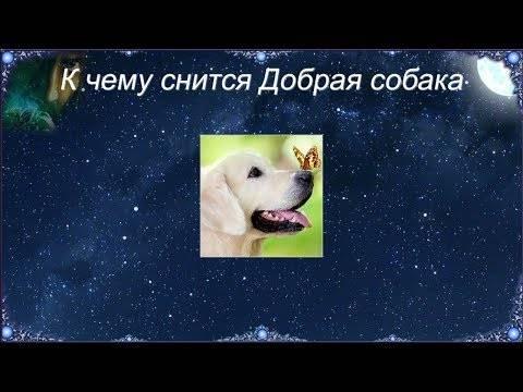 Сонник собака к чему снится во сне? видеть собаку что означает?