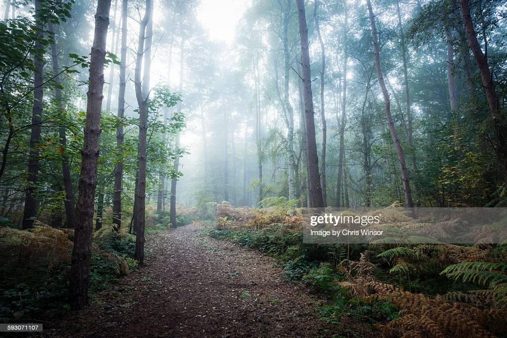 К чему снится лес: толкование и значение сна, выбор сонника - tolksnov.ru