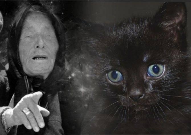 Большой черный кот