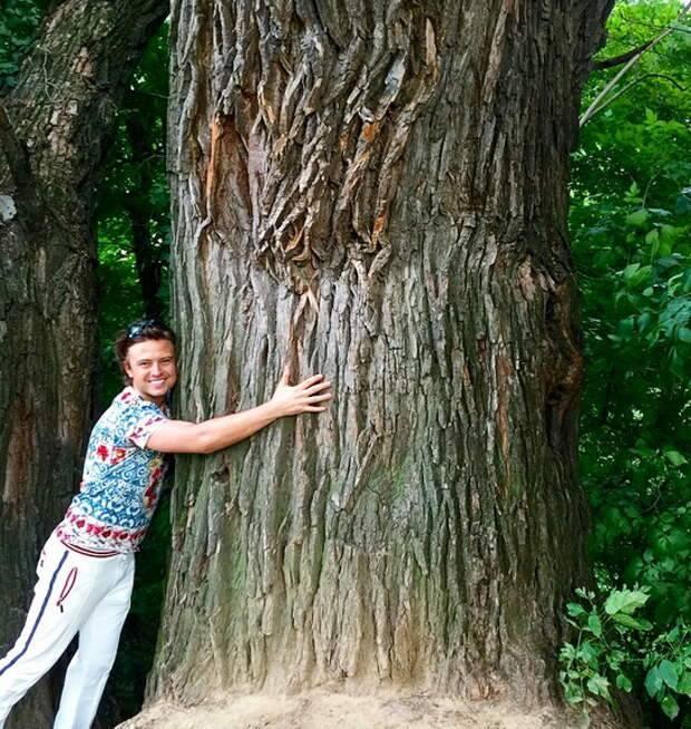 Деревья, дающие энергию человеку