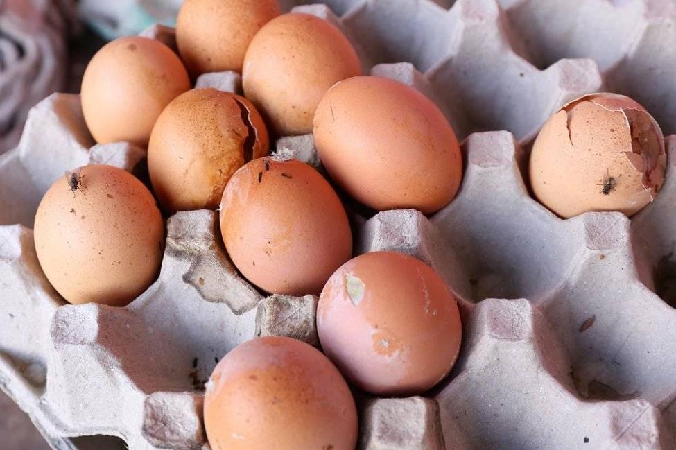 К чему снятся тухлые черные куриные яйца