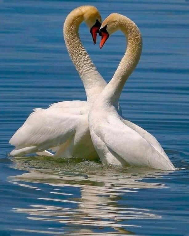 Камень ♥ любви: какие самоцветы помогут женщине привлечь любовь и замужество, сохранить верность
