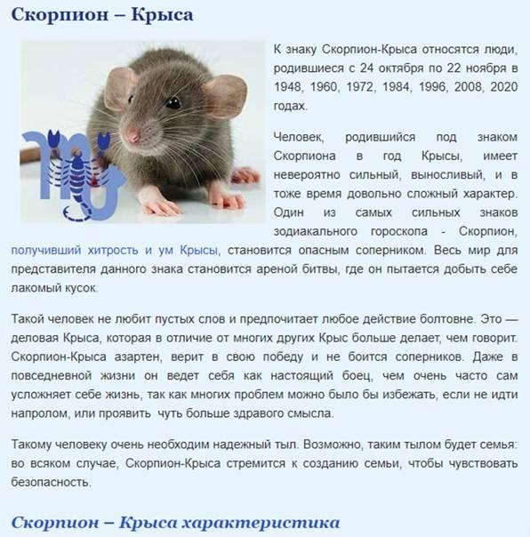 Люди, рожденные в год крысы: характеристика мужчин и женщин, совместимость | zdavnews.ru