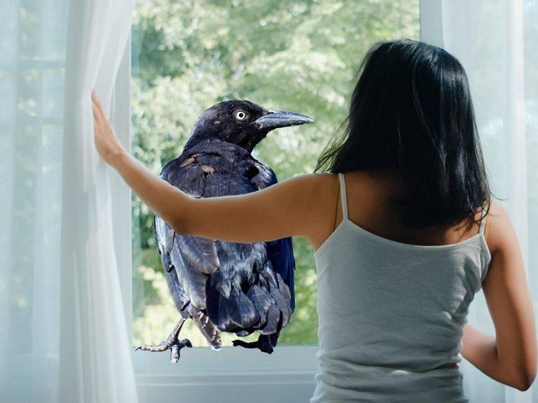 Примета ворона села на голову или коснулась: к чему задела или пролетела над головой