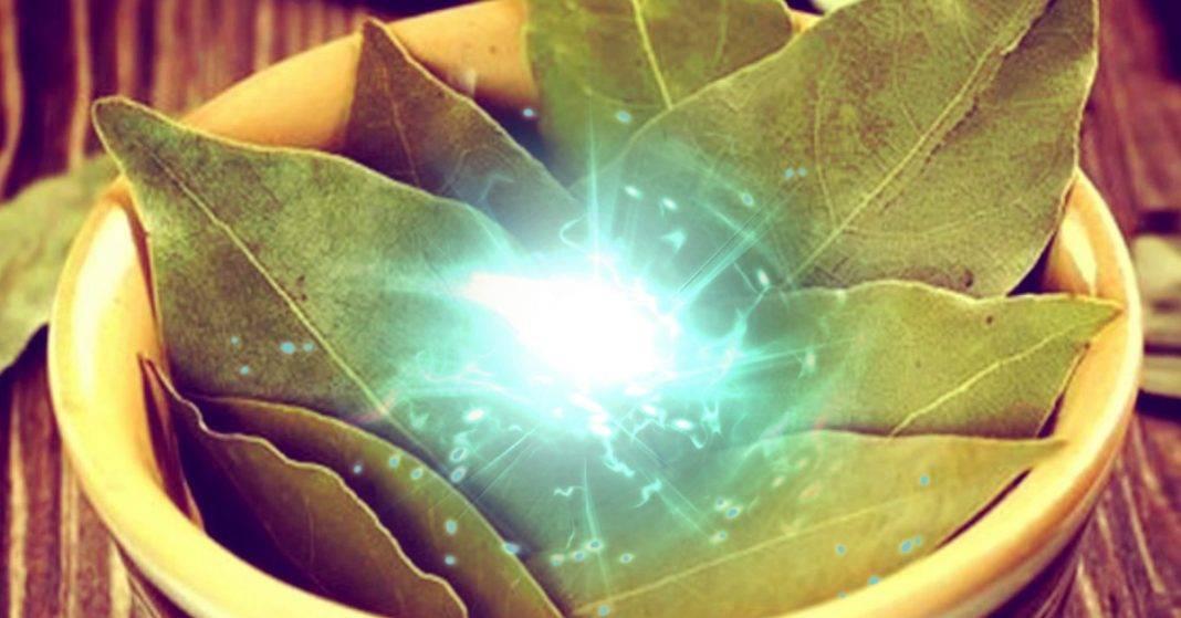 Магические свойства лаврового листа: привлечение денег и любви