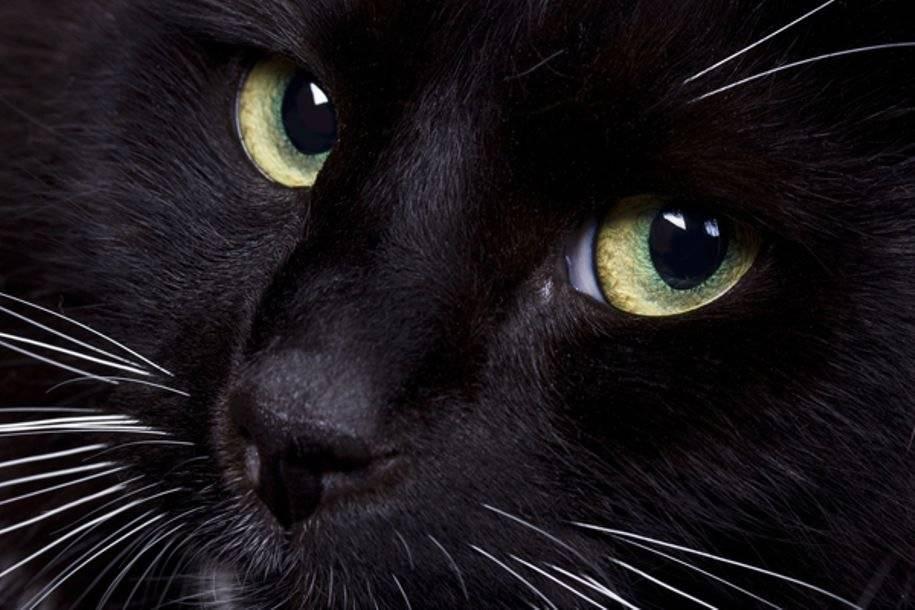 Сонник черный кот играет. к чему снится черный кот играет видеть во сне - сонник дома солнца