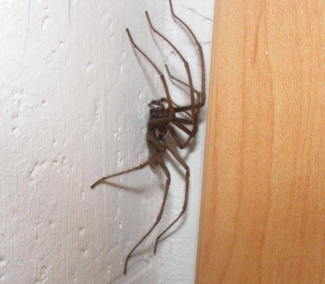 Приметы о пауках в доме, в машине, на стене и одежде: полный сборник трактовок