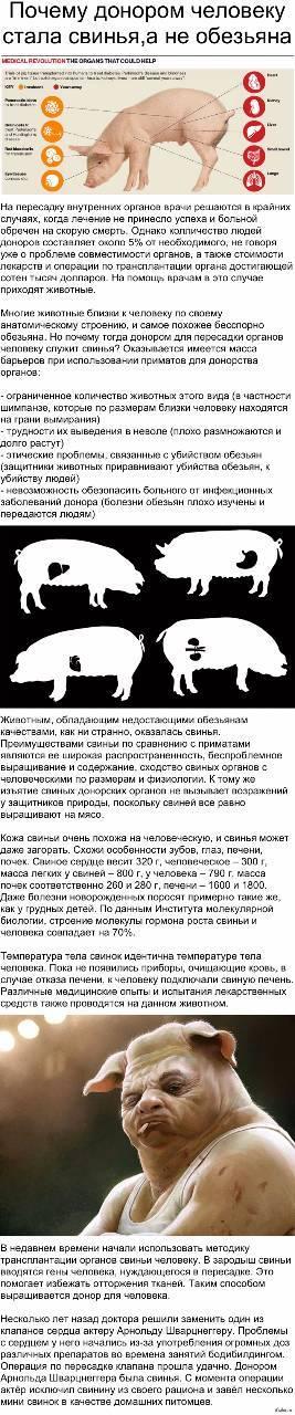 Совместимость знаков свинья и собака