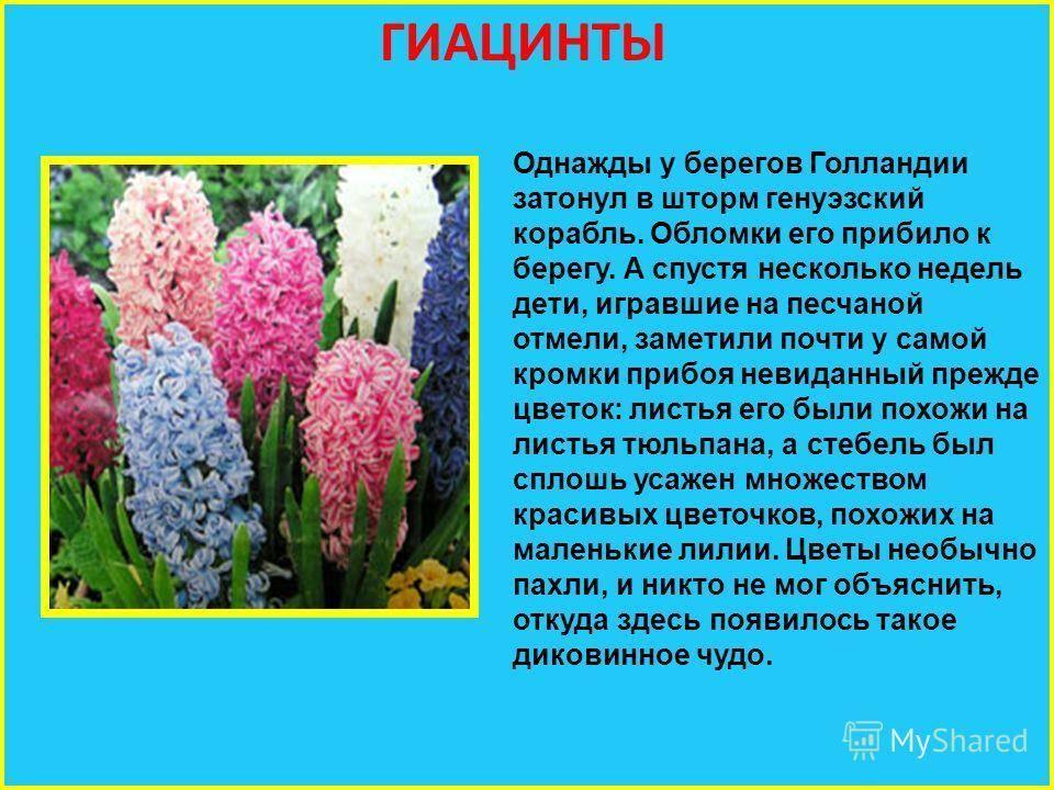 Беседа с детьми «легенда о происхождении цветов». воспитателям детских садов, школьным учителям и педагогам
