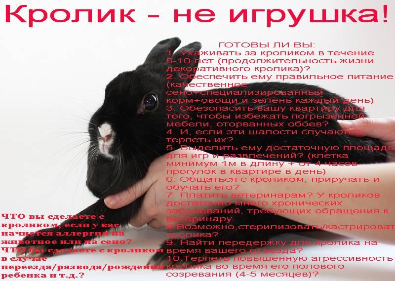 Год кролика, кота, заяца: характеристика и года рождения   pro-everyday.ru