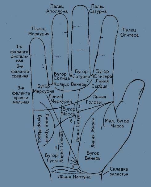 Хиромантия: холмы на руке, названия, значение и толкование символов | vip magic