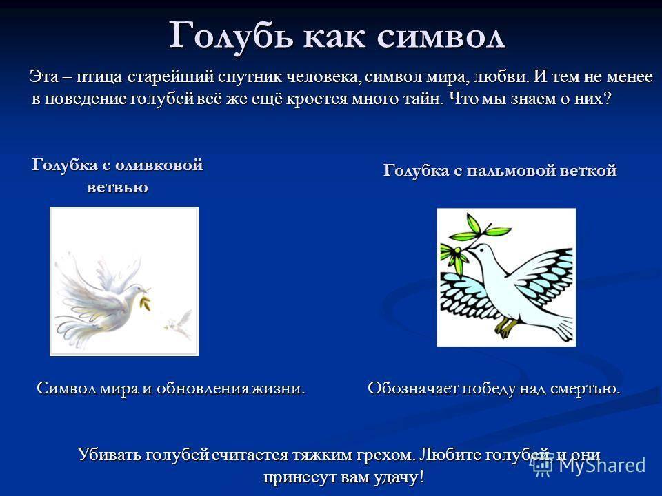 Древние символы: аист, ворон, голубь, лебедь, петух - что они символизируют?