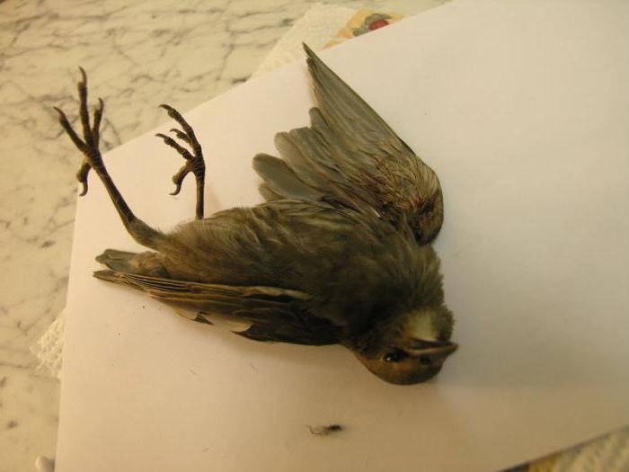 Сонник мертвая черная птица. к чему снится мертвая черная птица видеть во сне - сонник дома солнца