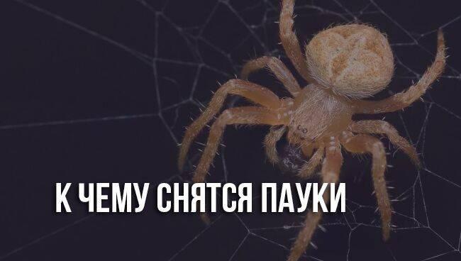 К чему снится паук. видеть во сне паук - сонник дома солнца