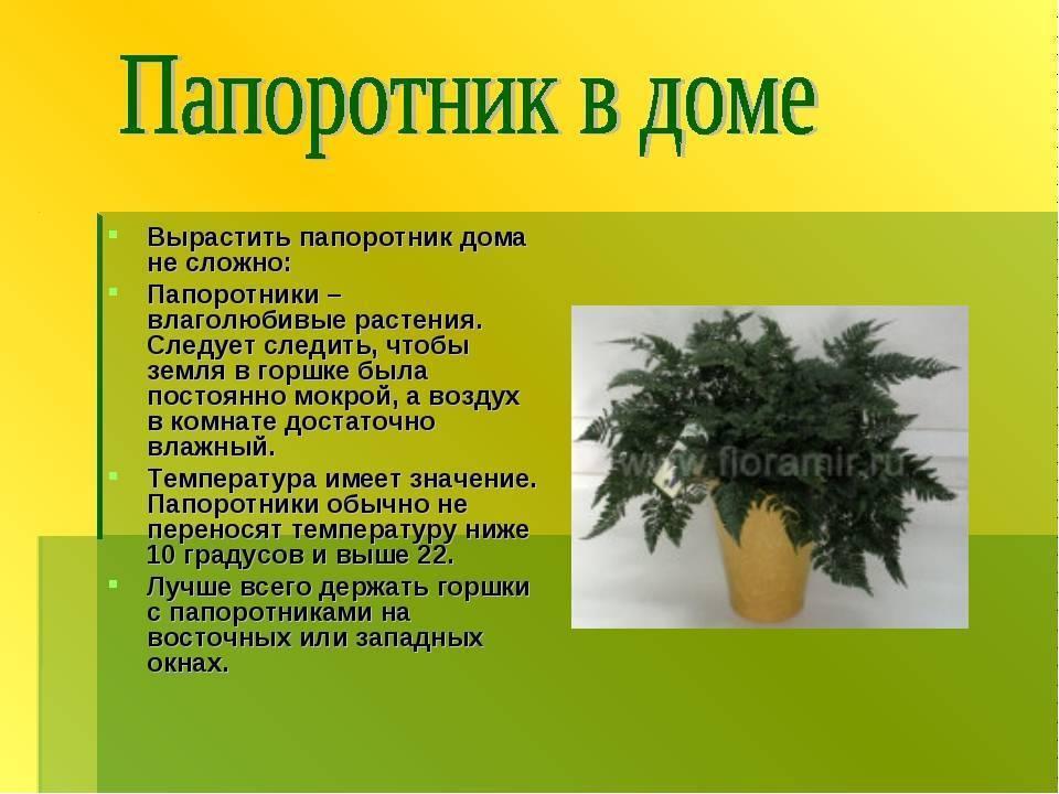 Растение комнатное кротон - 22 приметы и суеверия для дома