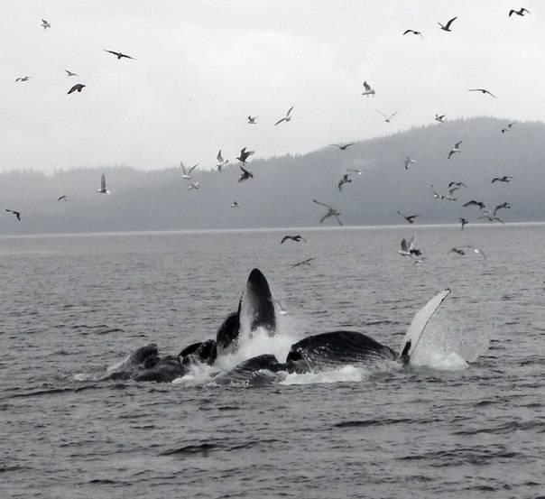 К чему снится кит: что это значит, белый, синий, в воде, плавает, нападает