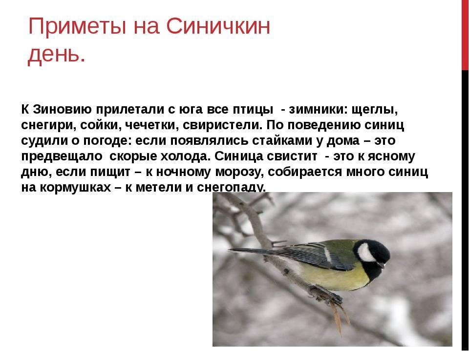 Приметы с птицами — 17 народных поверий с птицами