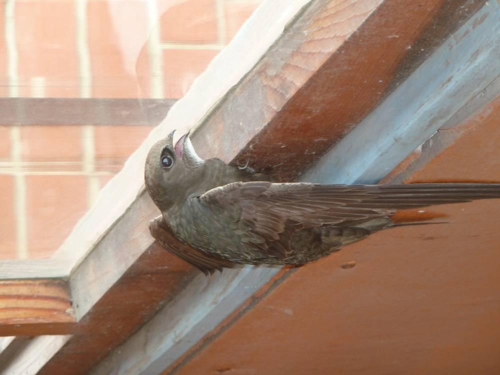 Если птица залетела в дом - толкование народной приметы