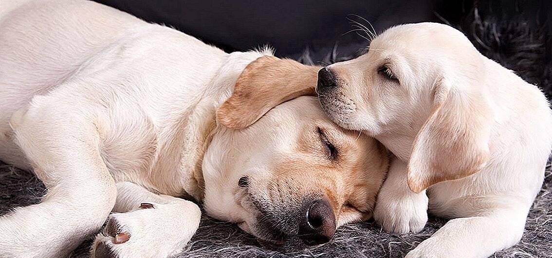 Собака белого цвета