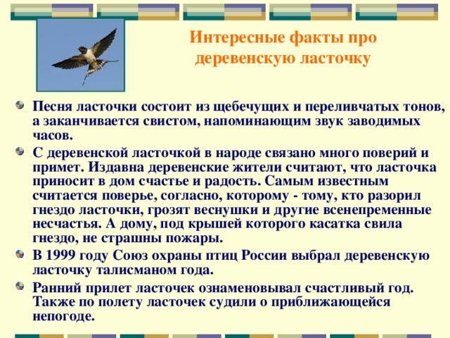 Научное и фантастическое объяснения, почему перед дождем ласточки низко летают :: syl.ru