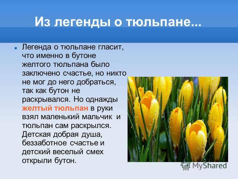 Растения осеннего цветника поверья и легенды - sk-fatera.ru