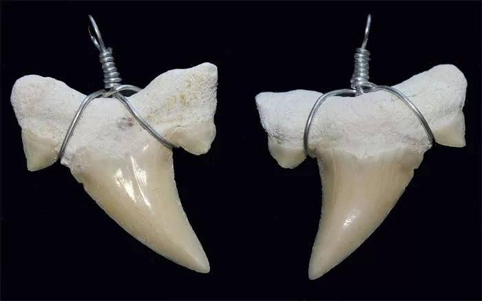 "Отзывы об ""амулет зуб акулы"""
