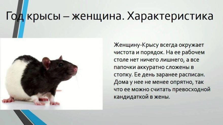 Женщина крыса – характеристика года рождения