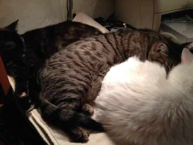 Сонник серая кошка с котятами. к чему снится серая кошка с котятами видеть во сне - сонник дома солнца