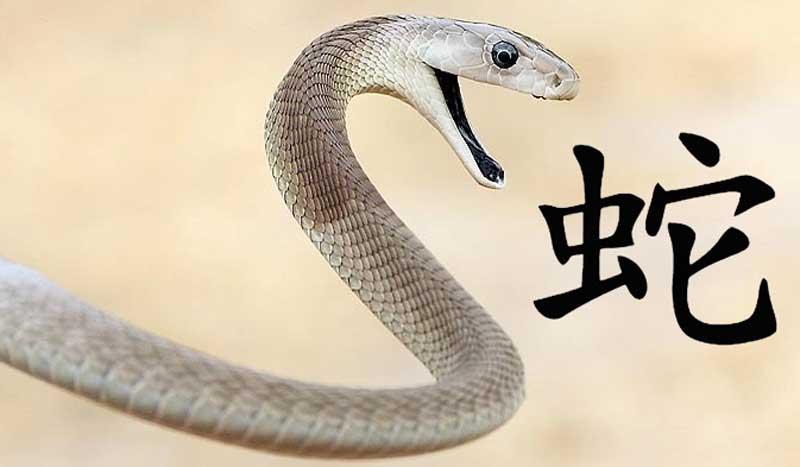 Год змеи: характеристика