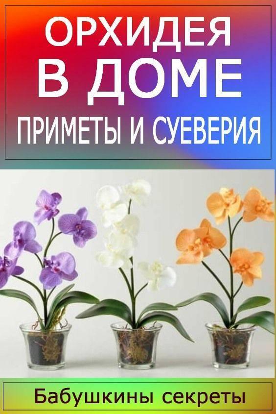 Можно ли дома держать орхидею: почему нельзя выращивать цветок в квартире - народные приметы, влияние на человека, чем растение может быть опасно для здоровья?