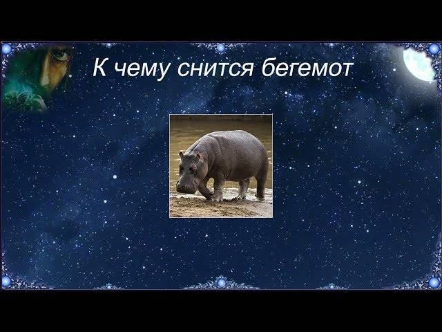 К чему снится бегемот: толкование сонников   zdavnews.ru