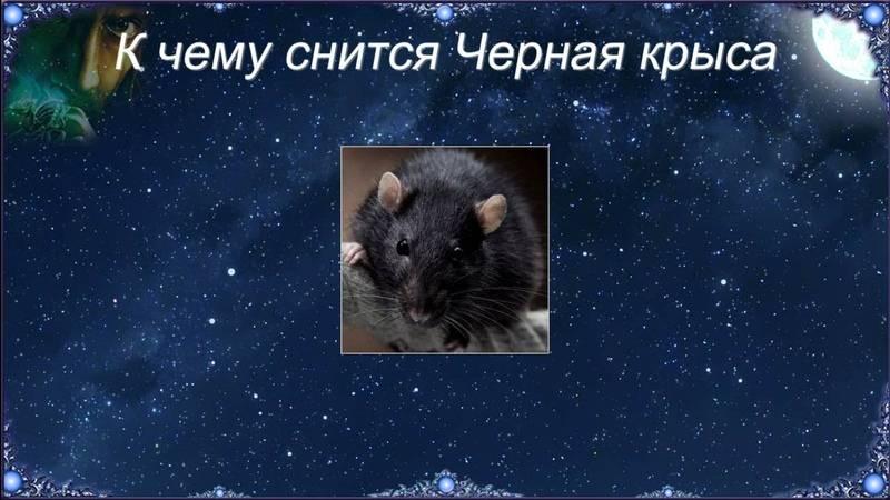 К чему снится Черная и белая крыса