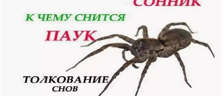Убивать много пауков во сне
