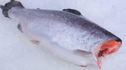Что означает, если женщине приснилась рыба ???? — 40 толкований по сонникам ????: к чему снится девушке видеть или покупать во сне много живых свежих или замороженных сомов
