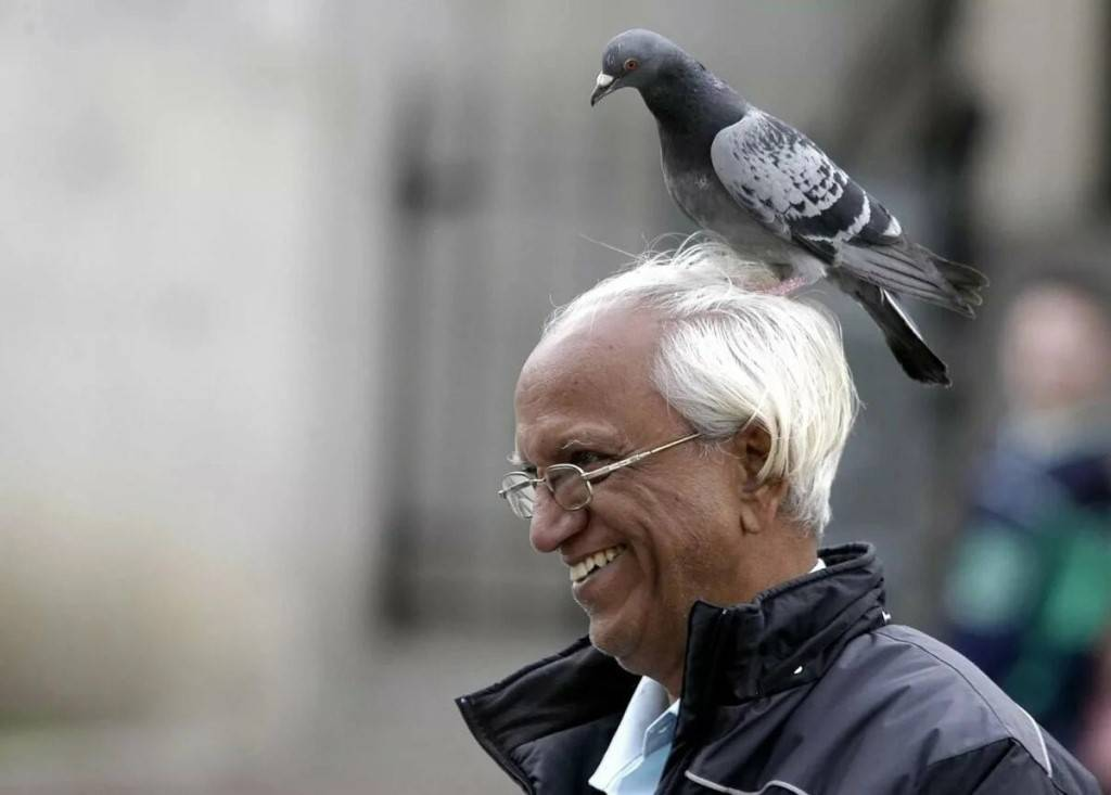Что по приметам ждет человека, которому на руку села птица