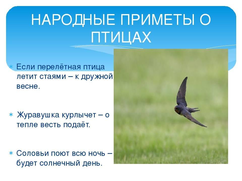 Приметы про перо птицы: найти на улице, дома или на балконе