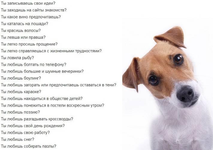 Какие вопросы можно задать парню?   wikilady.ru