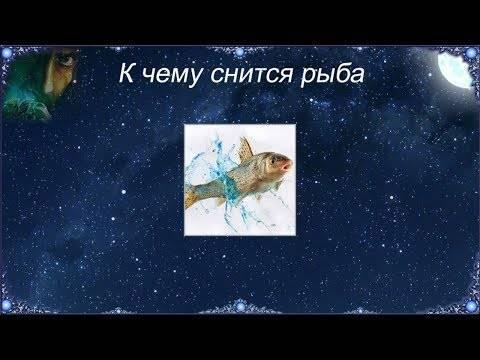 Живая рыба — толкование сна по сонникам