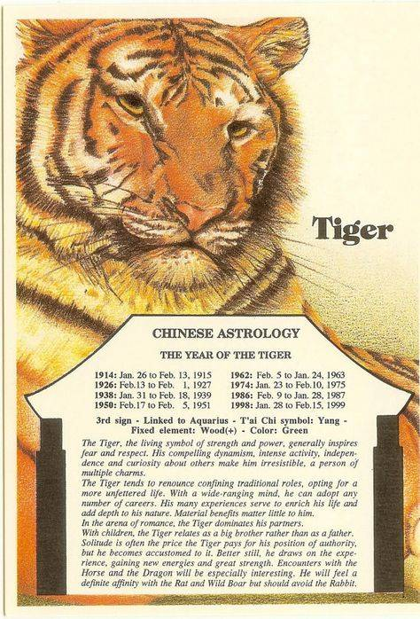 Мужчина-тигр - женщина-тигр совместимость
