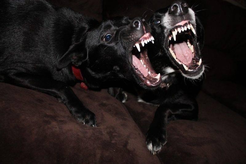 К чему снится нападение волков женщине или мужчине - толкование сна по сонникам