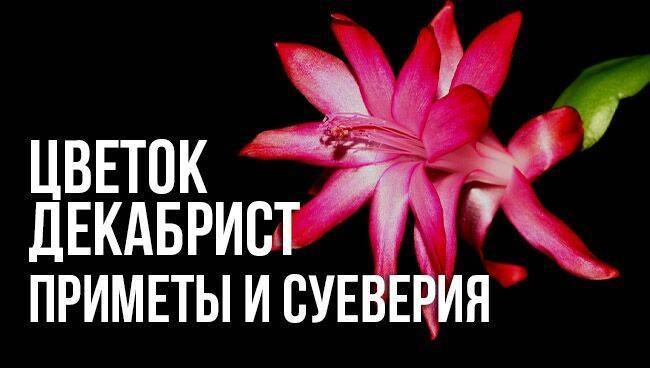 Красивые кактусы: фото цветущих суккулентов, выращивание и уход в домашних условиях  - 42 фото