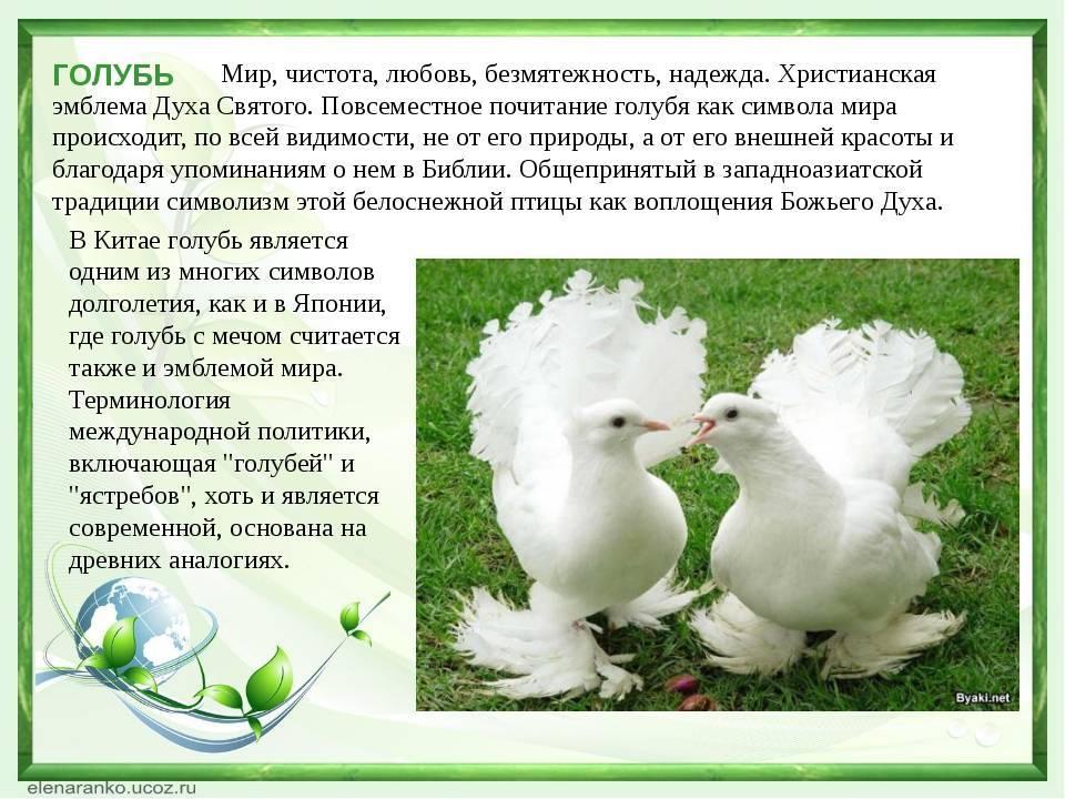Символ мира - голубь :: syl.ru