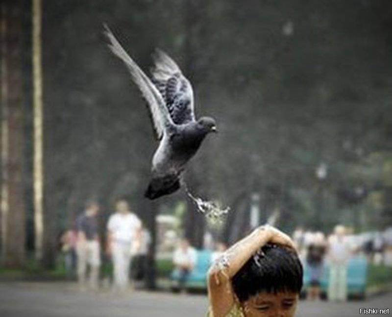 Примета птица написала