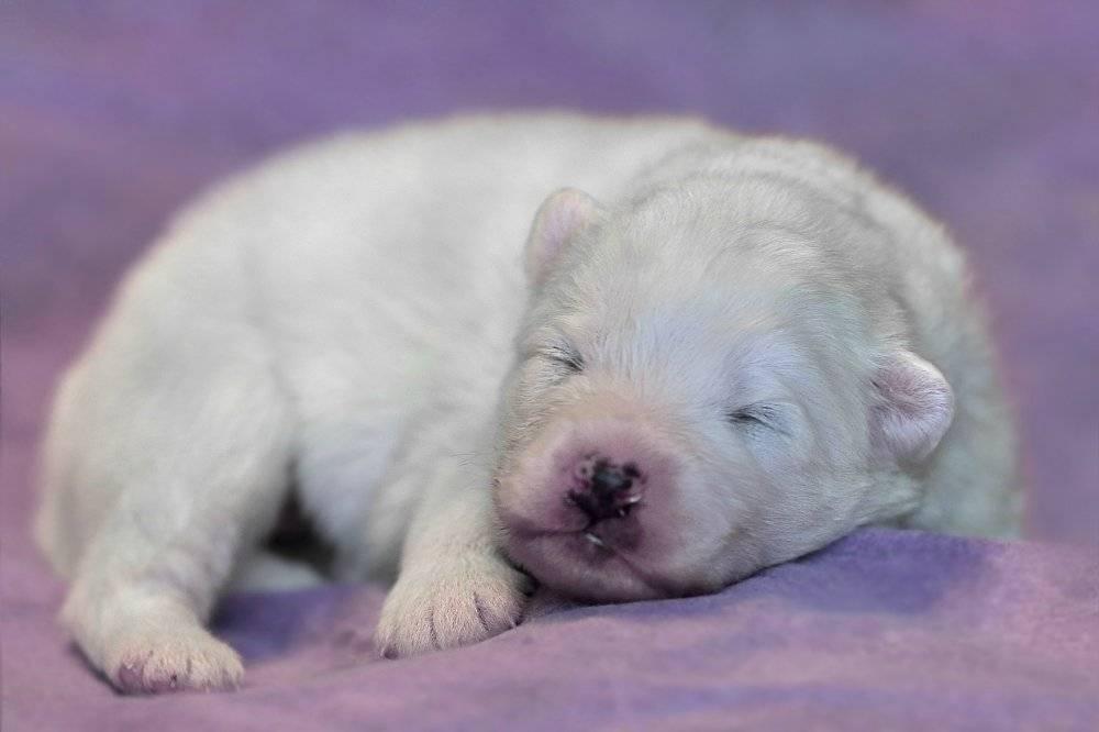 Черная и белая собака
